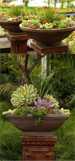Small Picture Best 25 Succulent gardening ideas only on Pinterest Cacti and