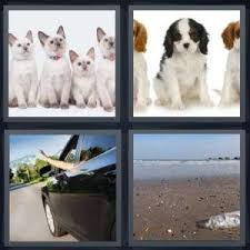 4 Pics 1 Word Answer for Kittens, Puppies, Trash, Dirty   Heavy.com