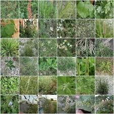 Free Plant Identification Garden Weeds Plant