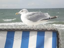 Lustige Sprüche Ostsee Sprüche Zitate Leben