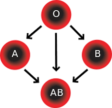 Blood Group Compatibility For Couples Considering Marriage
