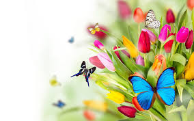 colorful butterfly wallpapers. Beautiful Colorful 1920x1080  Intended Colorful Butterfly Wallpapers A