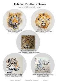 Fwf Panthera Genus Poster 2018 V1 Wild Cat Family