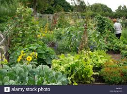 Kitchen Garden Vegetables Raised Bed Kitchen Garden With A Mix Of Vegetables And Flowers