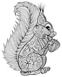 Go Nuts For A Squirrel Coloring Page Kidspressmagazinecom