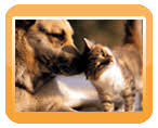 welcome to happy catsndogs pet care we provide pet care services by choosing happy catsndogs pet care you can rest assured that your pet is being pampered and cared for by a qualified trustworthy pet care professional