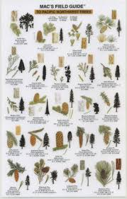 Tree Identification Chart Take A Walk A Guide And Discover The Glory Of Our Local