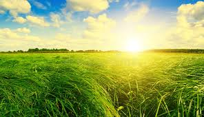 grass field sunset. Download Green Grass Field And Forest Under Sunset Sun. Stock Photo - Image Of Countryside