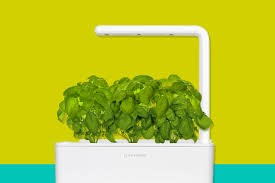 the 9 best indoor herb growing kits for