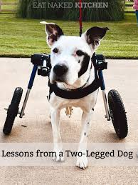 Lessons From A Two Legged Dog Eat Naked Kitchen