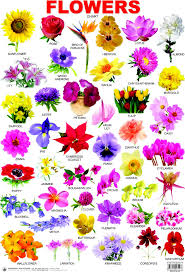flowers types pictures and names indian flower name list with image picture in for blue