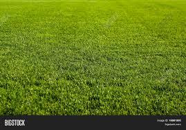 nice green grass texture form a soccer field31 green