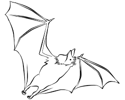 Small Picture Realistic bat coloring pages flying ColoringStar