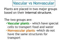 Venn Diagram Plants Vascular Vs Nonvascular Plants Venn Diagram Non Plant Tropicalspa Co