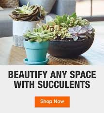 <b>Succulents</b> - Plants & Garden Flowers - The Home Depot
