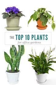 office gardening. Top 10 Plants For Office Gardens Gardening L