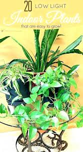 office plants no light. Indoor Plants Low Light Plant Maintenance My Web Value . Office No I