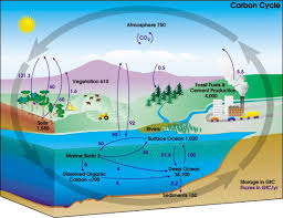 Carbon Cycle Flow Chart Why Is The Carbon Cycle Important