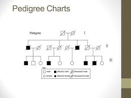 Pedigree Charts The Family Tree Of Genetics Learning