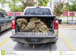 Close-up Of Back Of Pickup Truck With Bed Protector And Rolls Of Sod ...