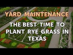 to plant rye grass in texas