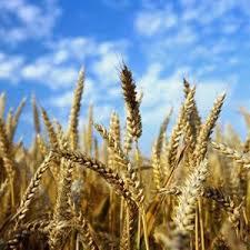 پایان نامه رشد اقتصادی در کشاورزی