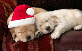 cute christmas puppies. Exellent Cute Cutechristmaspuppies539037jpg Throughout Cute Christmas Puppies Austin U0026 Ally Wiki  Fandom