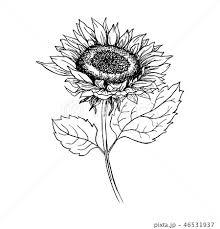 花 ひまわり 白黒 植物の写真素材 Pixta