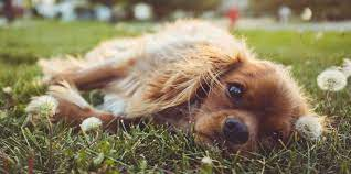 Treat your dog to a fun and active day at camp and bring home a happy and pooped pooch! 19 Best Los Angeles Dog Daycares Expertise Com