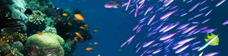 Species Diversity Definition Biodiversity Of The Great Barrier Reef Curious
