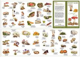 Wild Mushroom Identification Charts Order By Mail Using