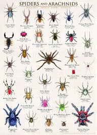 Eurographics Spiders And Arachnids 1000 Piece Puzzle