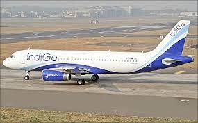 Image result for indigo pics
