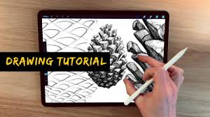 Drawing On Ipad Pro Ipad Pro Drawing Tutorial Pine Cone Drawing Without Reference