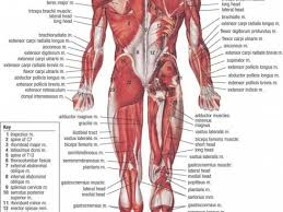 Body Organ Frequency Chart Organs The Body Photo Shared By