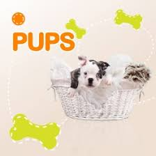 cute and soft for puppy