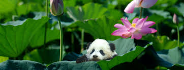Image result for animal squee
