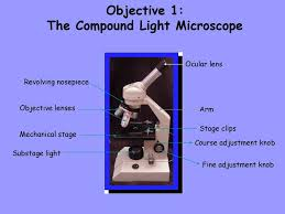 Substage Light Week 2 Microscopic Anatomy Ppt Download