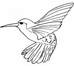 Small Picture Two Hummingbird Coloring Page Animal Coloring pages of