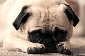 Résultat de recherche d'images pour 'chien trop mignons'