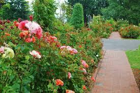 a path in portland rose garden portland oregon usa