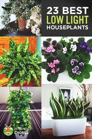 23 Low-Light Houseplants That Are Easy to Maintain and (Nearly) Impossible  to Kill. Shade Garden PlantsHouse ...