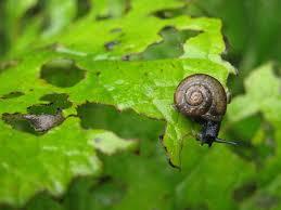 garden pest. Garden Pest H