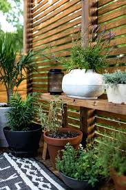 best plants for balcony best potted plants for patio privacy home outdoor decoration balcony screen ideas