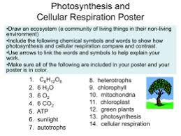 Science Interactive Notebook   Learn Sci furthermore The Dark reaction of Photosynthesis  higheredmcgraw besides Photosynthesis And Cellular Respiration Quiz  3    ProProfs Quiz besides  also  together with Photosynthesis   Cellular Respiration Worksheet additionally  in addition Cellular Respiration   Transpiration Brochure for INB additionally  in addition Infographic Photosynthesis For Kids Dis   Elipalteco additionally Week 10 Cellular Respiration and Photosynthesis   MrBorden's. on photosynthesis and cellular respiration worksheet