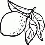 """Résultat de recherche d'images pour """"citron dessin"""""""