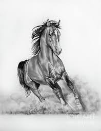 wild horse drawings in pencil.  Wild Image Result For Wild Horse Drawings In Pencil In Wild Horse Drawings Pencil R
