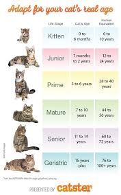 Age Of A Cat Chart How To Calculate Cat Years To Human Years Catster Cat