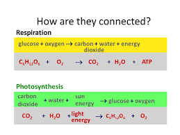 write the chemical equations for photosynthesis and respiration