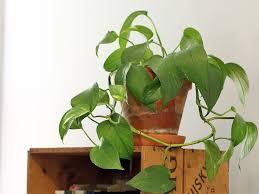 house plants. Top 10 Easy Houseplants New England Today House Plants